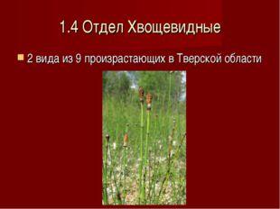 1.4 Отдел Хвощевидные 2 вида из 9 произрастающих в Тверской области
