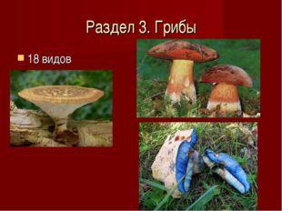 Раздел 3. Грибы 18 видов