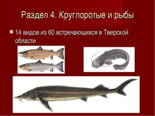 Раздел 4. Круглоротые и рыбы 14 видов из 60 встречающихся в Тверской области