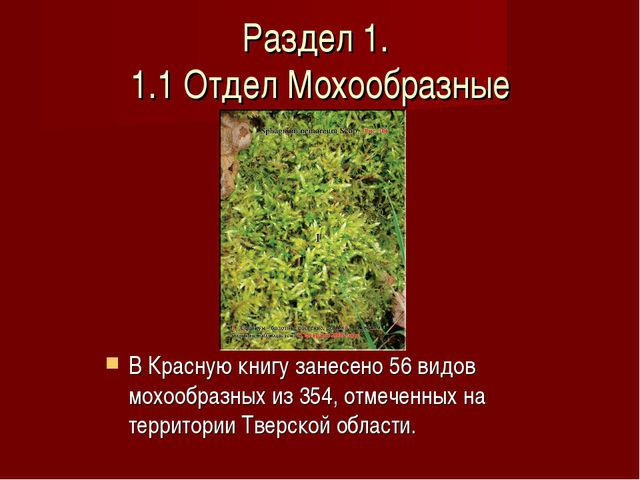 Раздел 1. 1.1 Отдел Мохообразные В Красную книгу занесено 56 видов мохообразн...