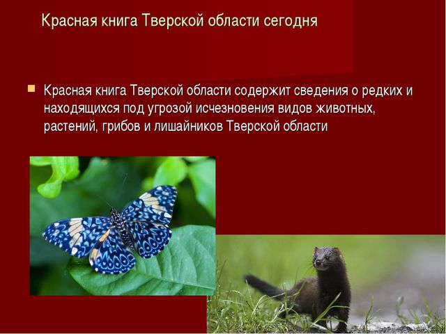 Красная книга Тверской области сегодня Красная книга Тверской области содержи...