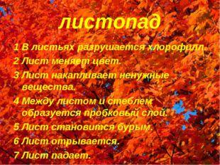 листопад 1 В листьях разрушается хлорофилл. 2 Лист меняет цвет. 3 Лист накапл