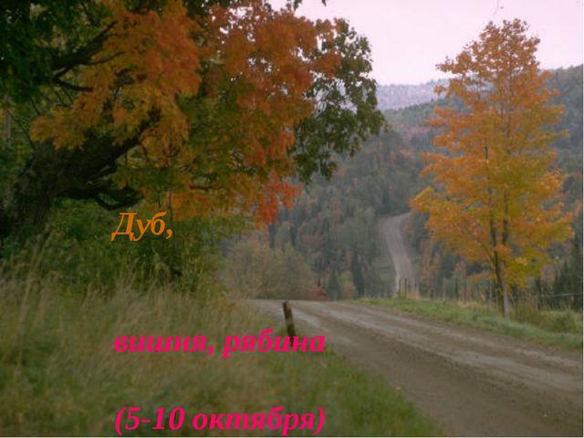 Дуб, вишня, рябина (5-10 октября)