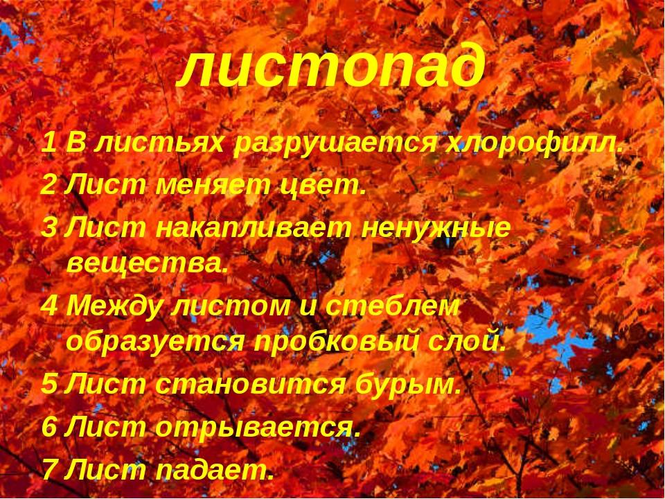 листопад 1 В листьях разрушается хлорофилл. 2 Лист меняет цвет. 3 Лист накапл...
