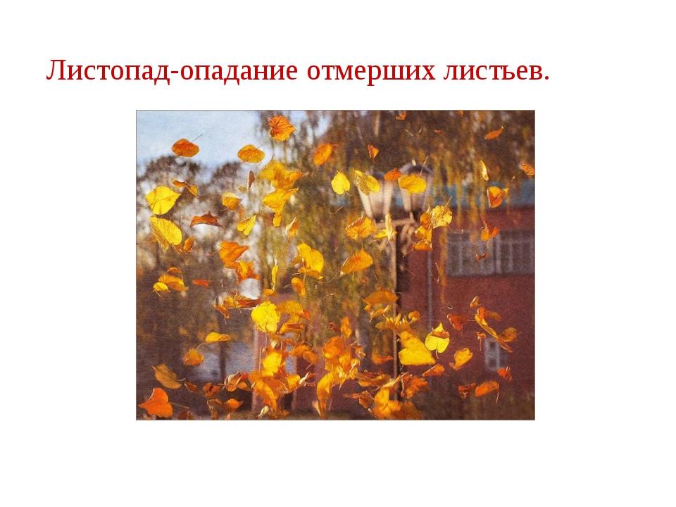 Листопад-опадание отмерших листьев.