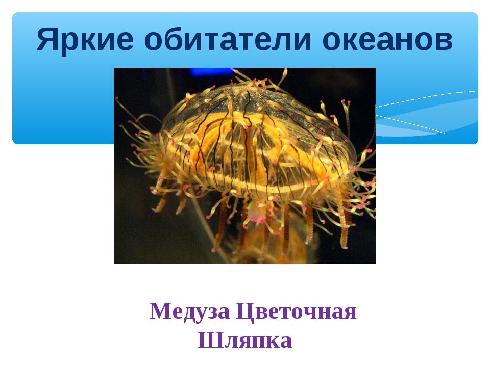 Яркие обитатели океанов Медуза Цветочная Шляпка