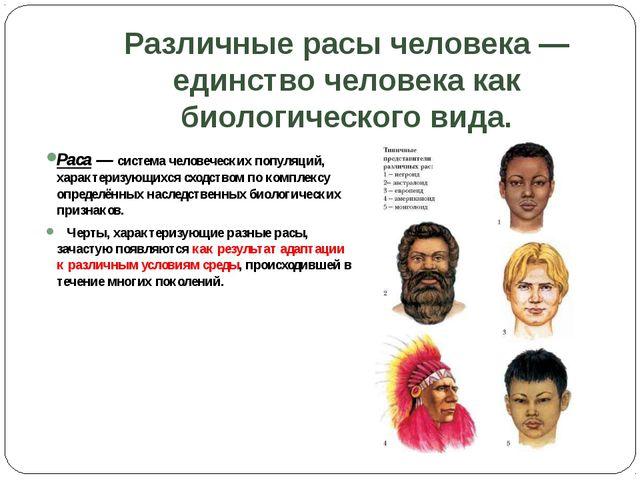 Различные расы человека — единство человека как биологического вида. Раса — с...