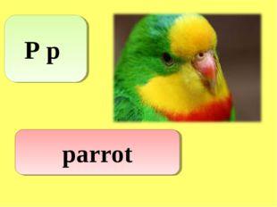 P p parrot
