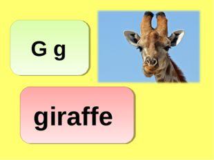 G g giraffe