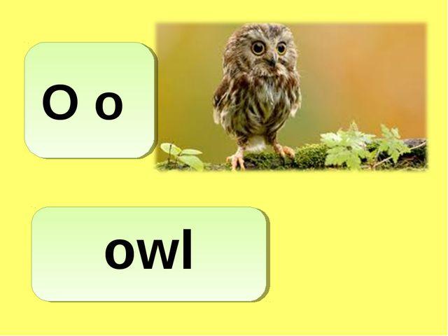 O o owl