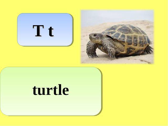T t turtle