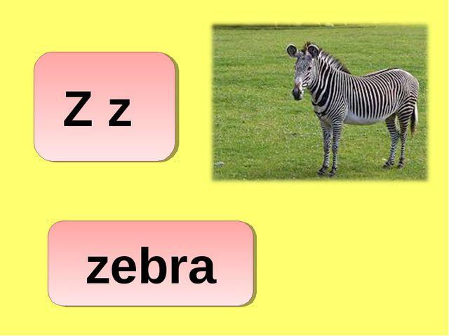 Z z zebra