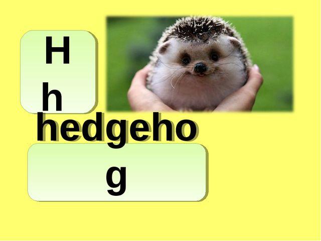 H h hedgehog