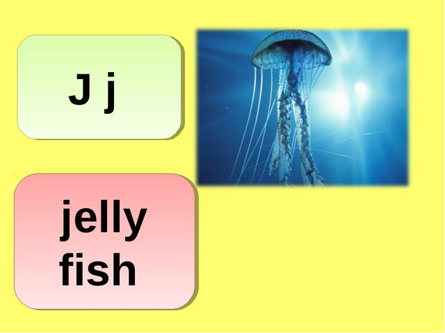 J j jelly fish