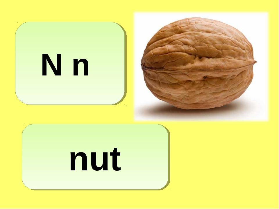 N n nut