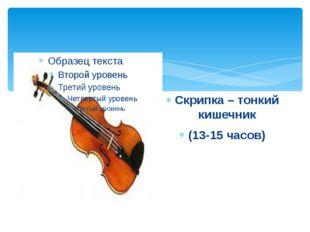 Скрипка – тонкий кишечник (13-15 часов)