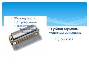 Губная гармонь- толстый кишечник ( 5 - 7 ч.)