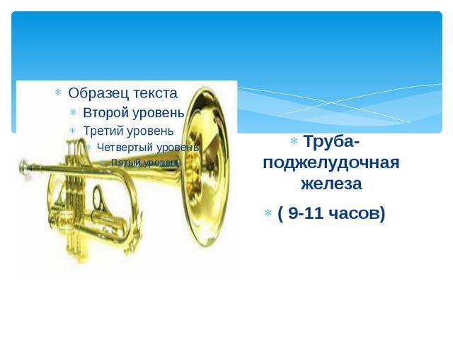Труба- поджелудочная железа ( 9-11 часов)