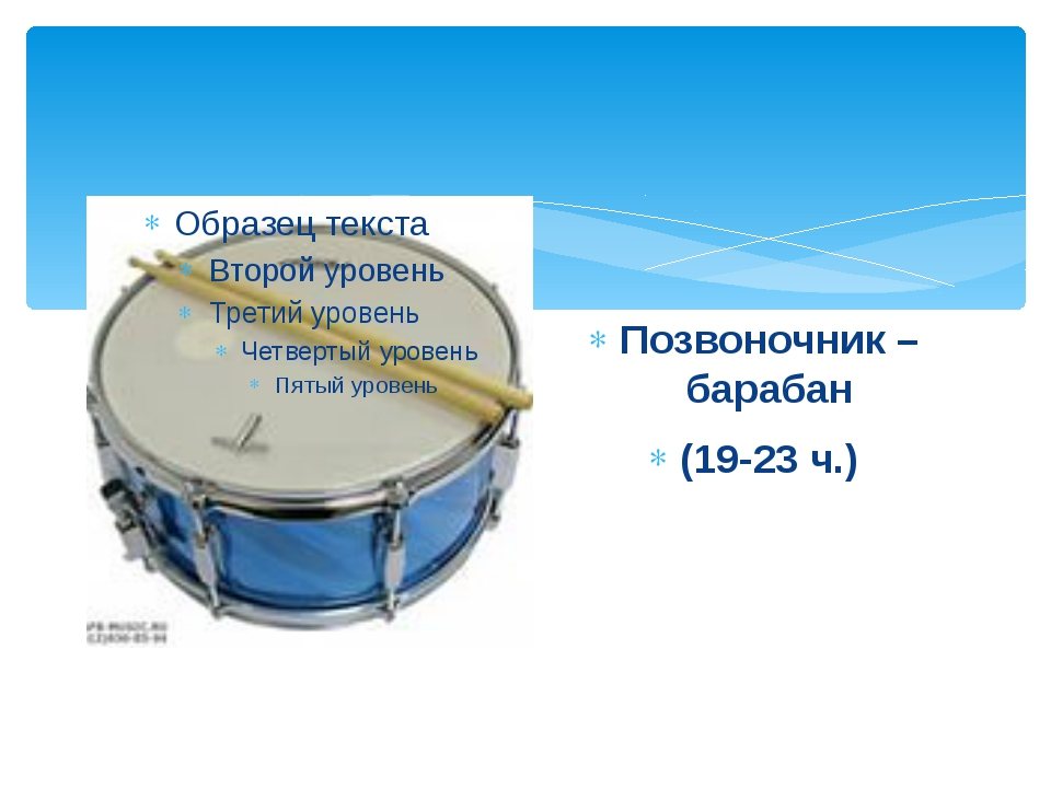 Позвоночник – барабан (19-23 ч.)
