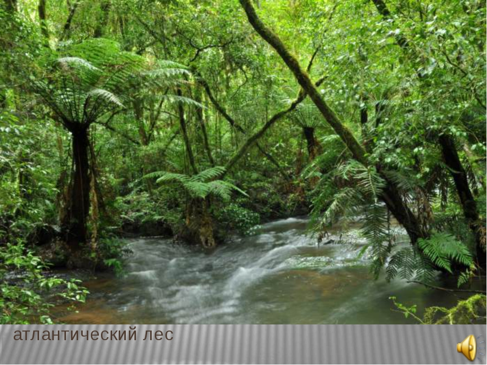 серрадо атлантический лес