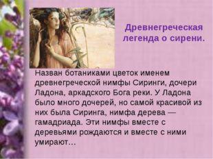 Древнегреческая легенда о сирени. Назван ботаниками цветок именем древнегрече