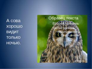 А сова хорошо видит только ночью.