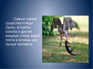 Самые зоркие существа-птицы! Орлы, ястребы, сокола и другие хищные птицы вид