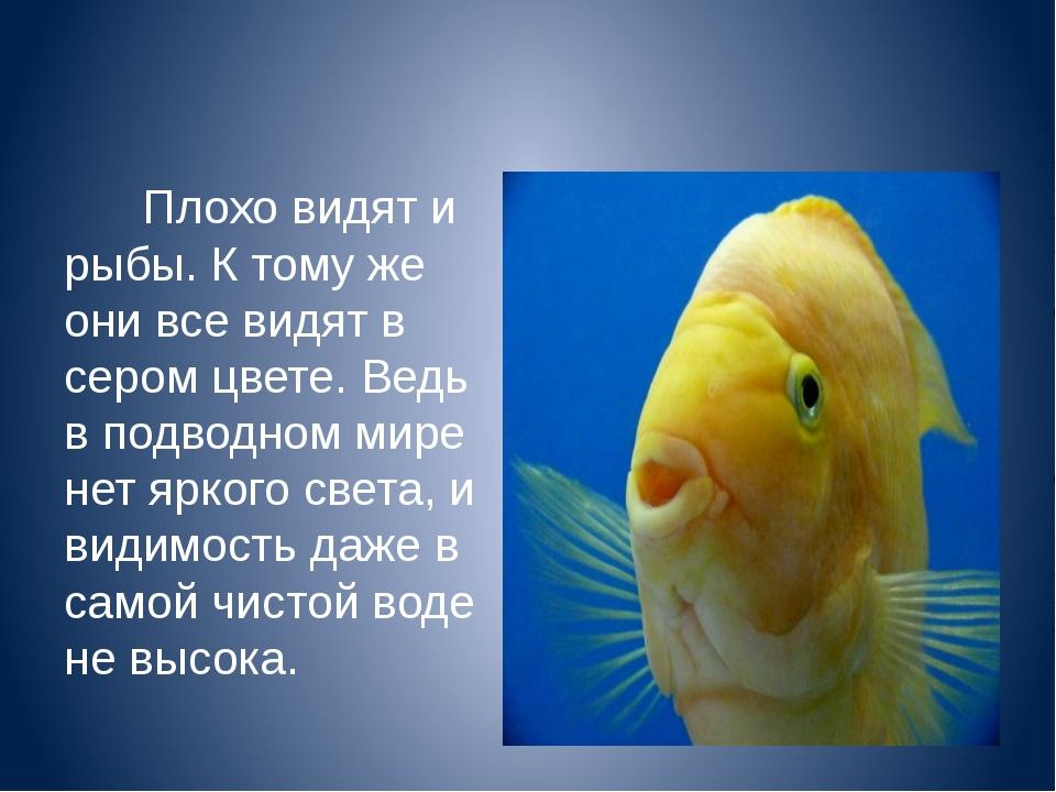 Плохо видят и рыбы. К тому же они все видят в сером цвете. Ведь в подводном...