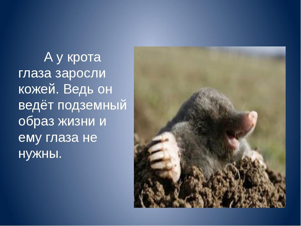 А у крота глаза заросли кожей. Ведь он ведёт подземный образ жизни и ему гла...