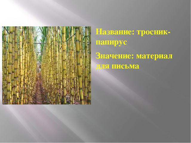 Название: тросник-папирус Значение: материал для письма