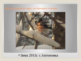Как посланники зари, на деревьях снегири Зима 2011г. с.Антоновка