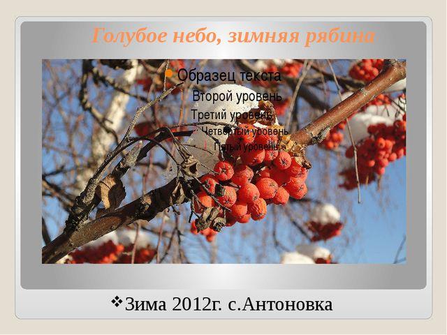 Голубое небо, зимняя рябина Зима 2012г. с.Антоновка