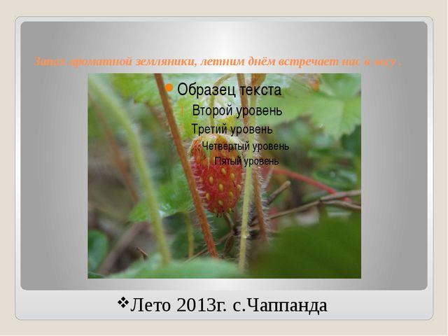Запах ароматной земляники, летним днём встречает нас в лесу . Лето 2013г. с.Ч...