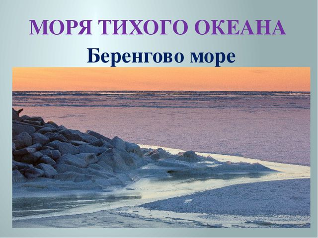 МОРЯ ТИХОГО ОКЕАНА Беренгово море