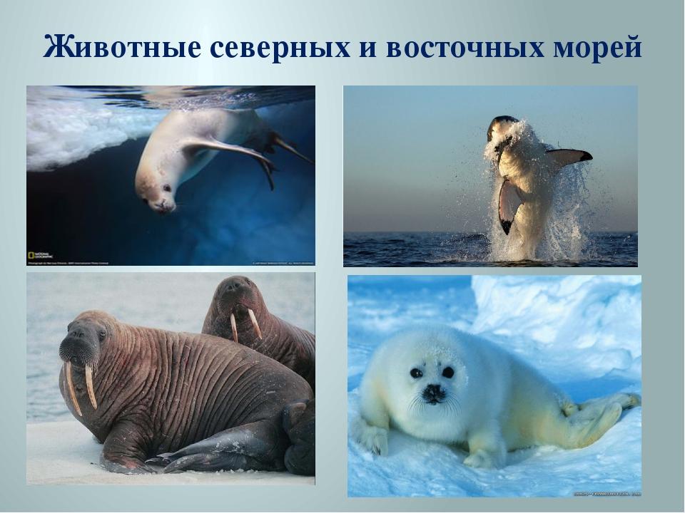 Животные северных и восточных морей