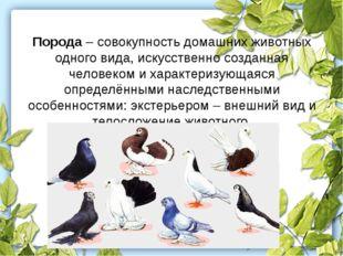 Порода – совокупность домашних животных одного вида, искусственно созданная ч