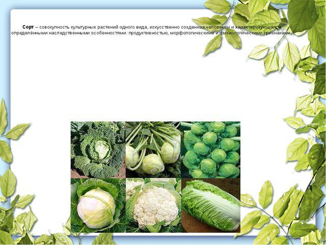 Сорт – совокупность культурных растений одного вида, искусственно созданная ч...