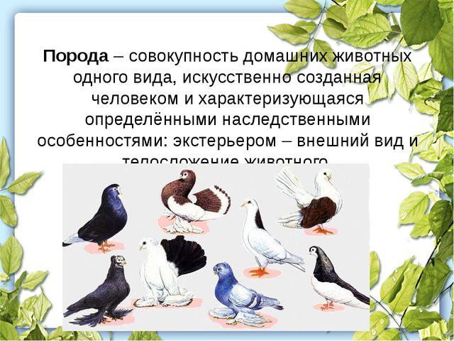 Порода – совокупность домашних животных одного вида, искусственно созданная ч...