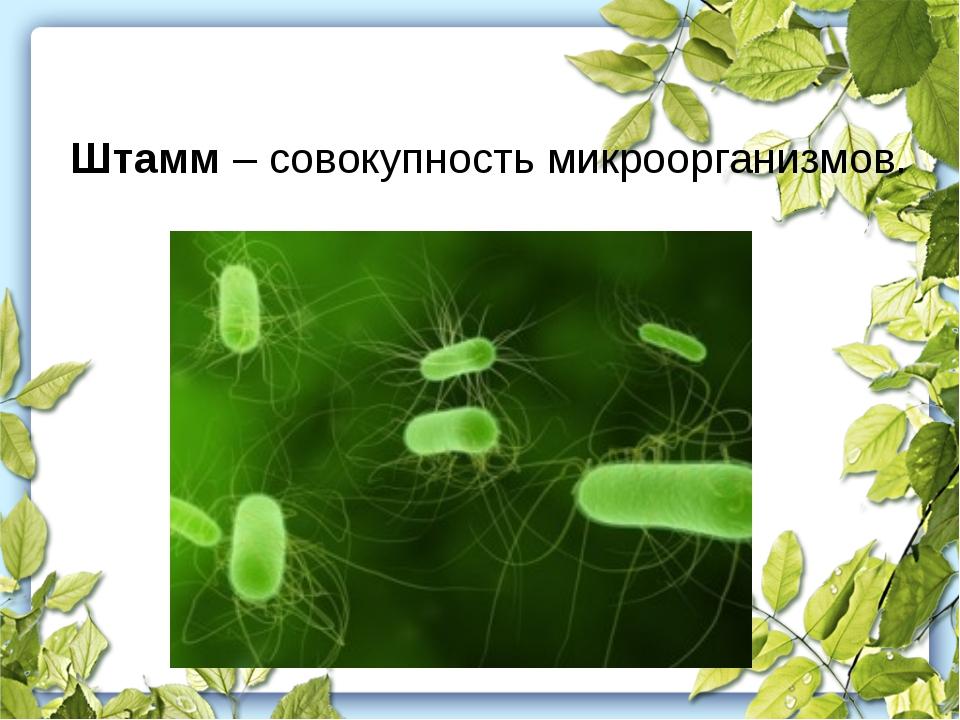 Штамм – совокупность микроорганизмов.