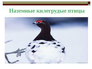 Наземные килегрудые птицы