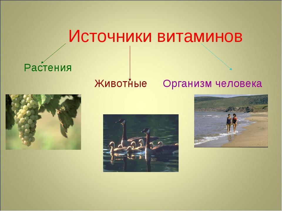 Источники витаминов Растения Животные Организм человека