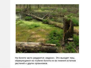 На болоте часто раздаются «вздохи». Это выходят газы, образующиеся на глубине