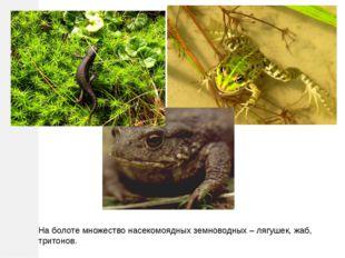 На болоте множество насекомоядных земноводных – лягушек, жаб, тритонов.