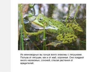 Из земноводных вы лучше всего знакомы с лягушками. Польза от лягушек, как и о
