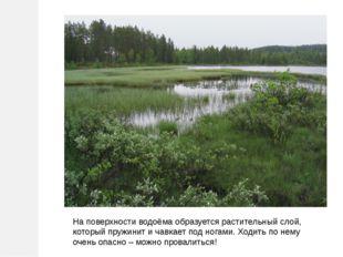 На поверхности водоёма образуется растительный слой, который пружинит и чавка