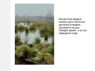 Без доступа воздуха нижние части болотных растений отмирают, опускаются на дн