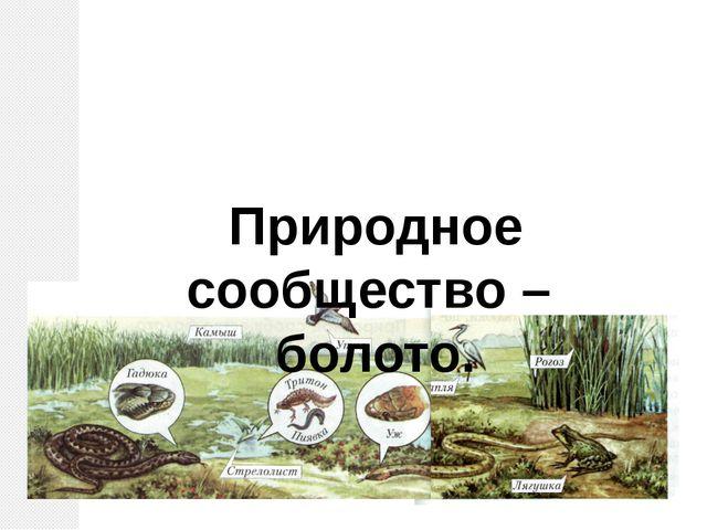 Природное сообщество – болото.
