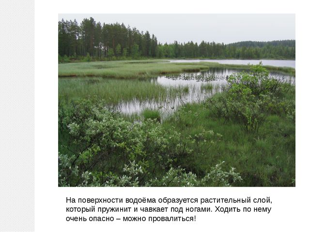 На поверхности водоёма образуется растительный слой, который пружинит и чавка...