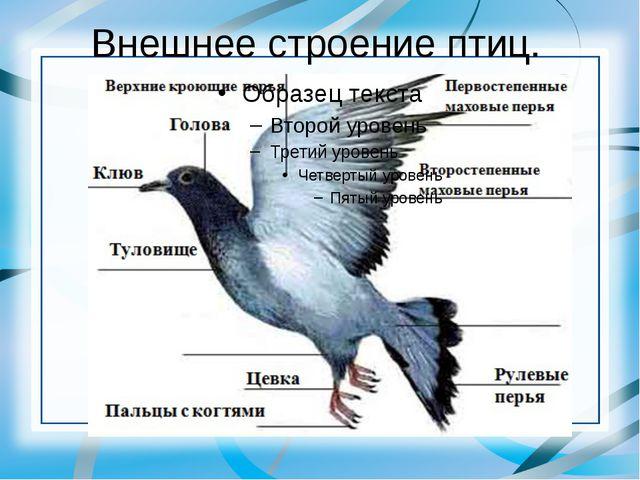 Внешнее строение птиц.