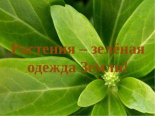 Растения – зелёная одежда Земли!